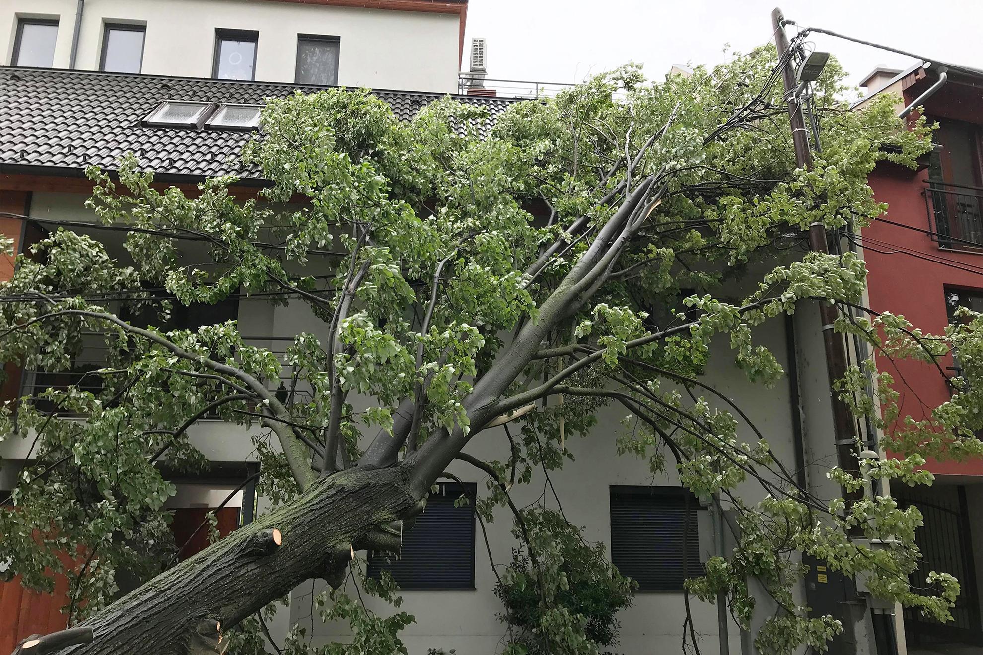 Családi házra dőlt egy fa Szombathelyen - Ugytudjuk.hu